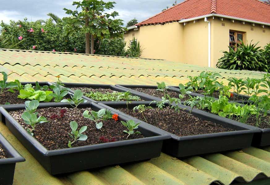 DIY self watering tray Growing food on roofs ...